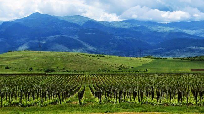 wine tour Bulgaria
